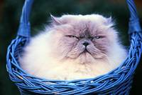 Cat_in_basket