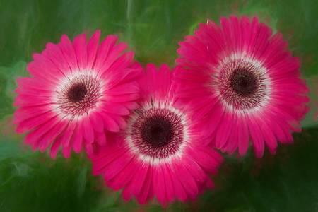 Three Pinkies