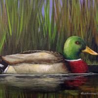 Mallard Drake Art Prints & Posters by Rich Summers Art