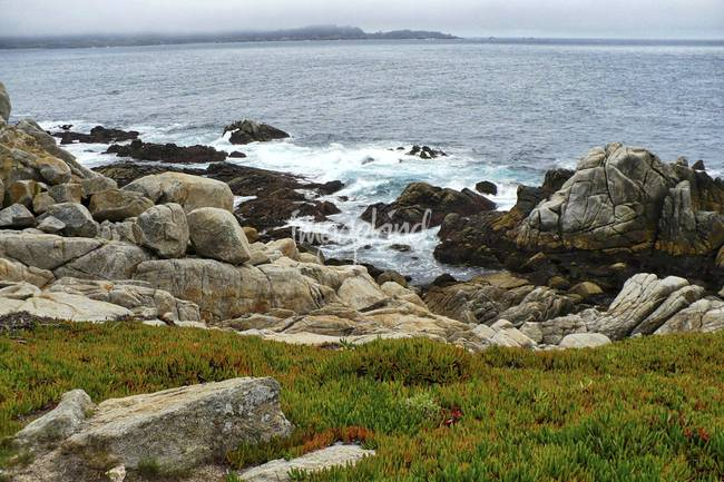 California Coast with Rocks and Ice Plant