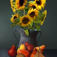 Pears And Sunflowers by I.M. Spadecaller