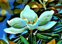Magnolia Dream  by Carol Groenen