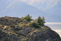 Turnagain Arm Study 1