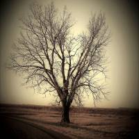 Rural Tree Art Prints & Posters by Toni Grote