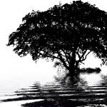 Tree on water - black and white Prints & Posters