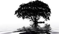 Tree on water - black and white