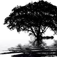Tree on water - black and white Art Prints & Posters by Susanna Shaposhnikova