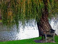 Sit Under the Old Weeping Willow Tree Wall Art