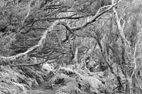 Ancient Forest Monochrome