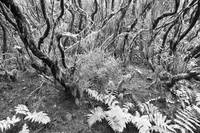 Laurel Forest Monochrome