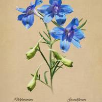 Blue Butterfly Delphinium by I.M. Spadecaller