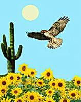 Red Tail Hawk & Sunflowers
