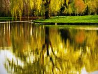 Reflections of Weeping Willow Tree Meditation Wall