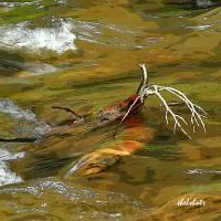 Rushing Waters Art Prints & Posters by Steve Shelasky
