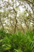 Trees at Merritt Island National Wildlife Refuge