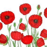 Red Poppies Field Watercolor by Irina Sztukowski Art Prints & Posters by Irina Sztukowski