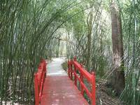 1010 red bridge through a bamboo garden