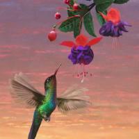 Fiery Throated Hummingbird by I.M. Spadecaller
