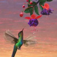 Fiery Throated Hummingbird by I.M. Spadecaller