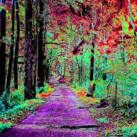 A Journey Through the Forest Art Prints & Posters by Kimmary MacLean