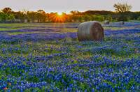 Sunrise Over Haybales and Bluebonnets