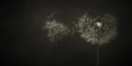 Dandelion Waltz Part three