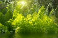 Beautiful ferns with green foliage green flower fe