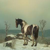 Horse On Snowy Summit Art Prints & Posters by I.M. Spadecaller