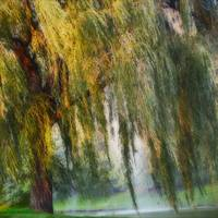Weeping Willow Tree Landscape Wall Art