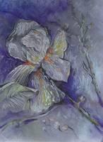 White Iris by Sara Fraser