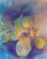 Yellow Iris by Sara Fraser