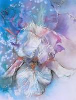 Iris by Sara Fraser
