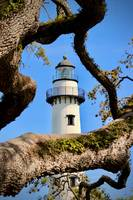 Oak Tree at St Simons Lighthouse