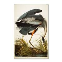 Great Blue Heron by John James Audubon 2