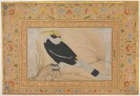 Great Hornbill, Folio from the Shah Jahan Album 15