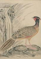Bird Album - ink-wash and watercolour, Japan in th