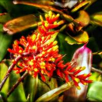 Among the Bromeliads Art Prints & Posters by Chris Crowley