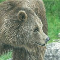 Brown Bear Art Prints & Posters by Carla Kurt