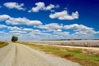 Road to Cotton