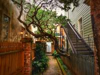 Tree grows over alley
