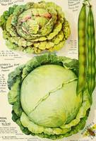 Vintage Vegetable Advertisement (1907)