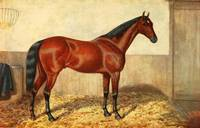 Vintage Stabled Horse Illustration (1905)