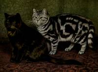 Vintage Short-Haired Cats Painting (1903)