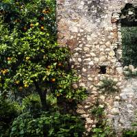 Orange Tree And A Stone Wall Art Prints & Posters by George Oze