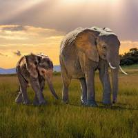 Bush Elephant Cow And Calf by I.M. Spadecaller