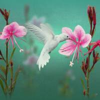 White Hummingbird and Ping Guara by I.M. Spadecaller