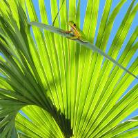 Saw Palmetto and Frog by I.M. Spadecaller