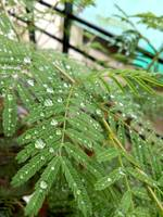 Set of Wet leaves