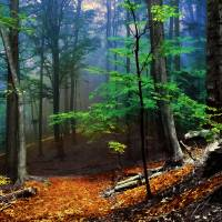 Forest Path Art Prints & Posters by Paul Simone