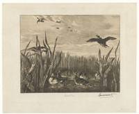 Landscape with drops in the water between reeds, F